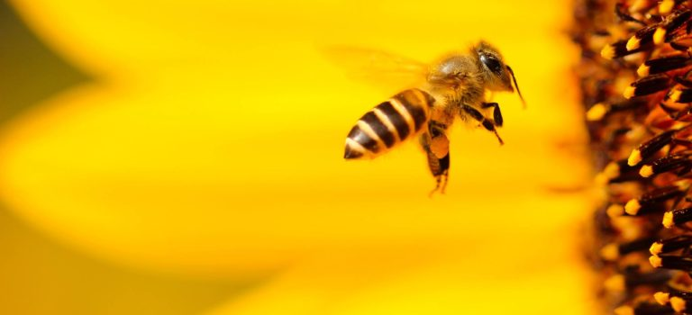 Top 4 Reasons To Host A Bee Colony