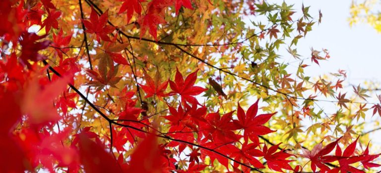 3 Bonnes Raisons De Planter Un Arbre à L'automne!